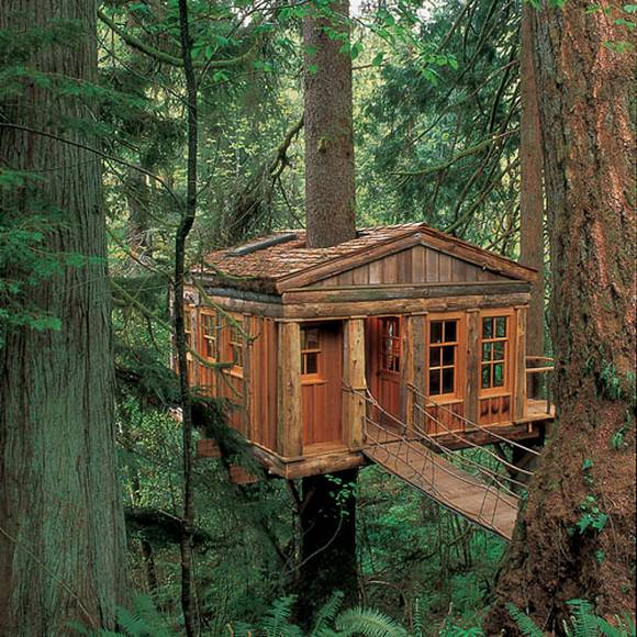 Unique tree huts