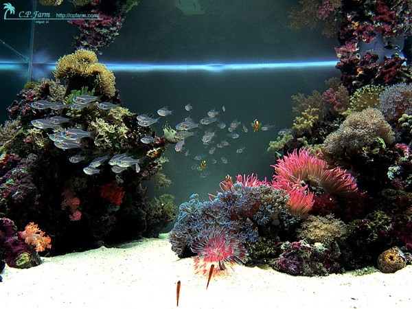 how to decorate aquarium design