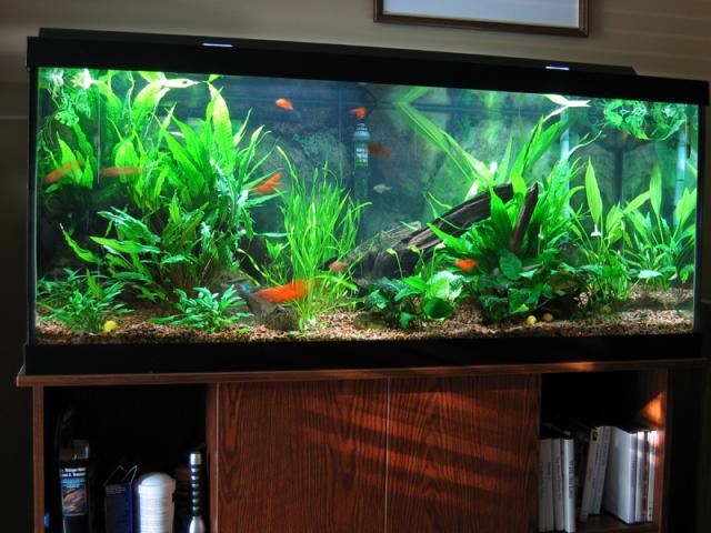 how to decorate aquarium ideas