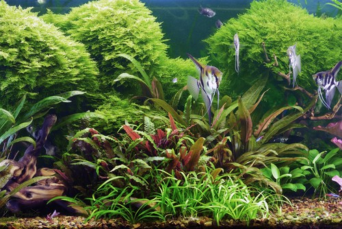 how to decorate aquarium plants