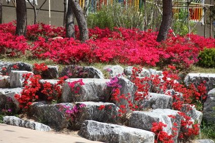 Rock garden designs decor