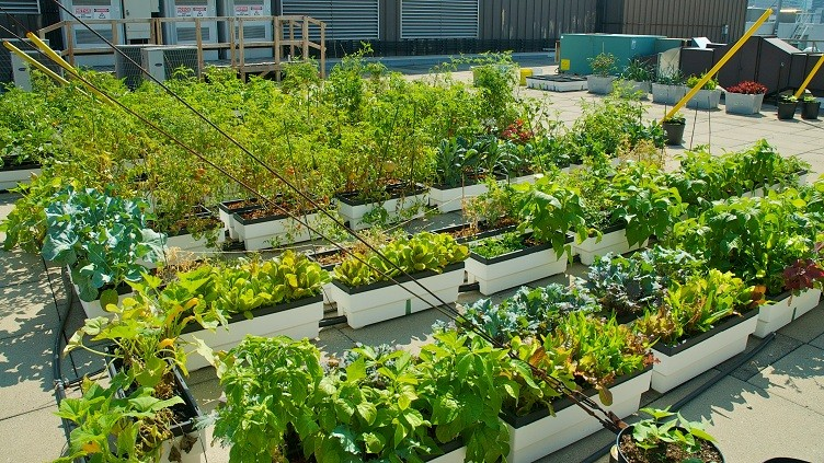 Rooftop vegetable gardens ideas