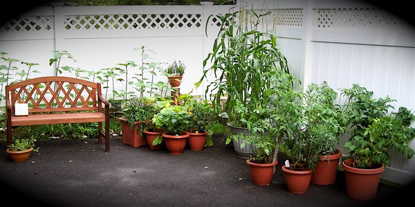 Urban vegetable gardening ideas