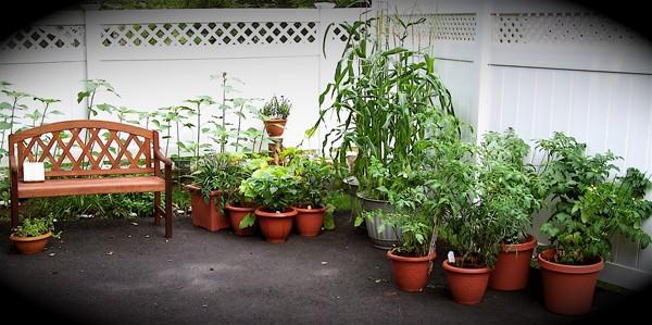 Urban vegetable gardening ideas