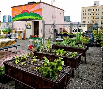 Urban ve able gardening roof