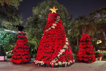 Busch gardens christmas town ideas
