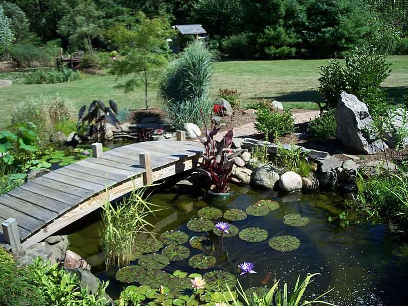 Water garden plants design