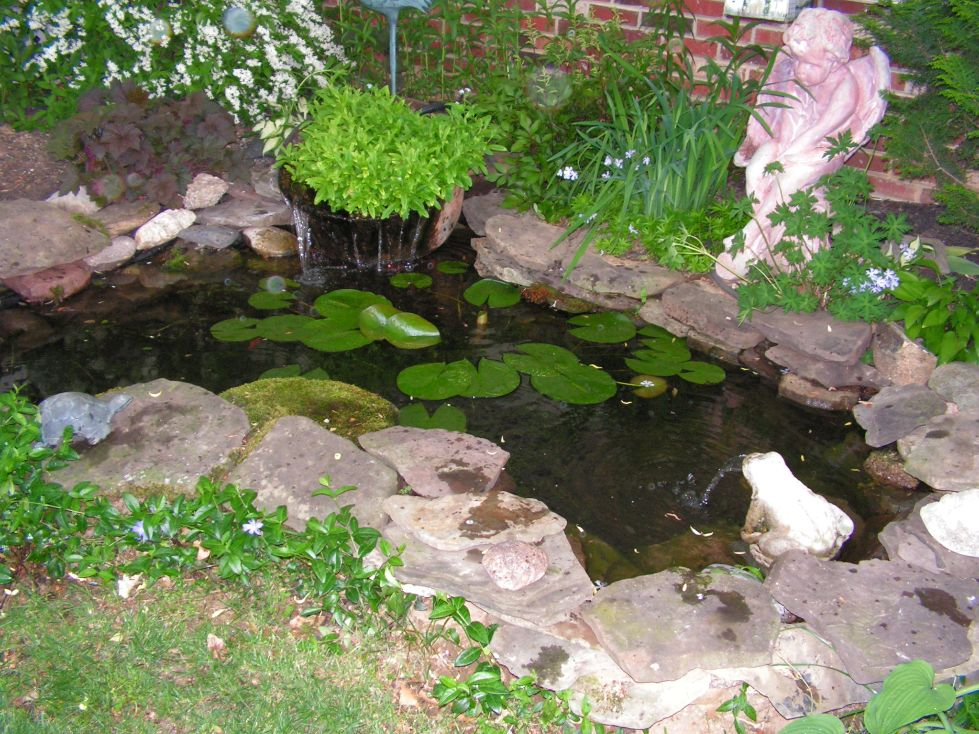 Water garden plants for shade