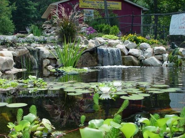 Water garden plants ideas