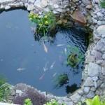 koi fish pond design